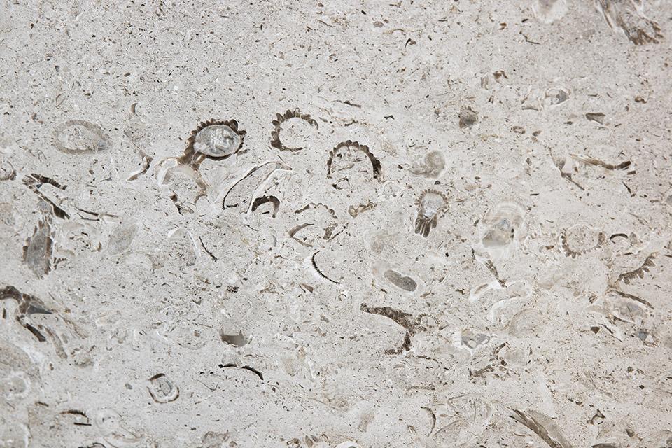 Variazione marmo di Aurisina Fiorita #2