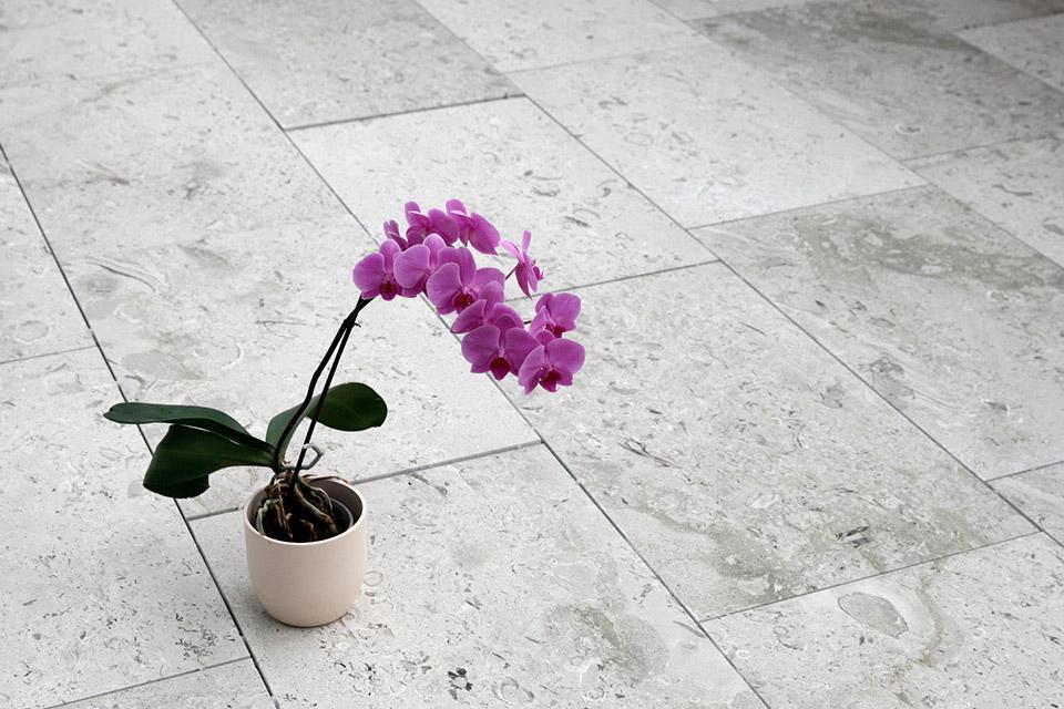 Aurisina Fiorita modulari con misure di lunghezza libera x 50 x 2cm